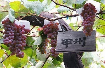 Koshu winogrona