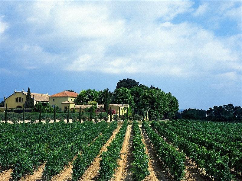 Firmy winiarskie walczą z ociepleniem klimatu