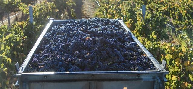 Czy w 2020 będzie za dużo wina na świecie?