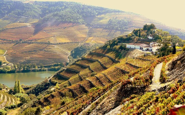 Najlepsze winnice 2020 - Quinta do Crasto, Portugalia, Dolina Douro.