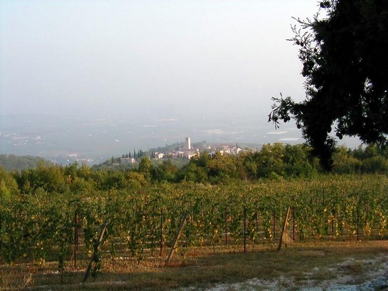 Region winiarski Valpolicella i jego wina
