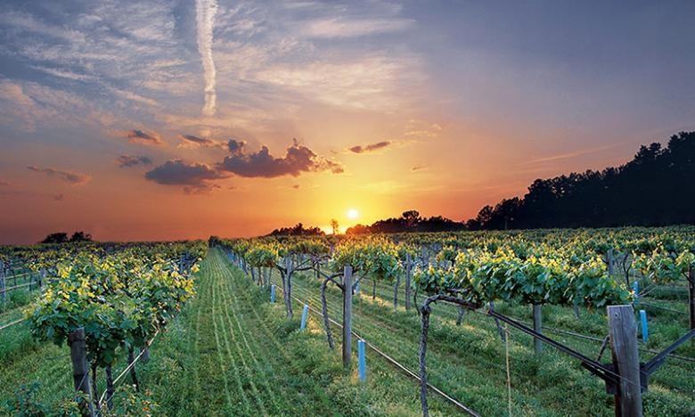 American Viticultural Area, AVA – co wspólnego ma z winem?