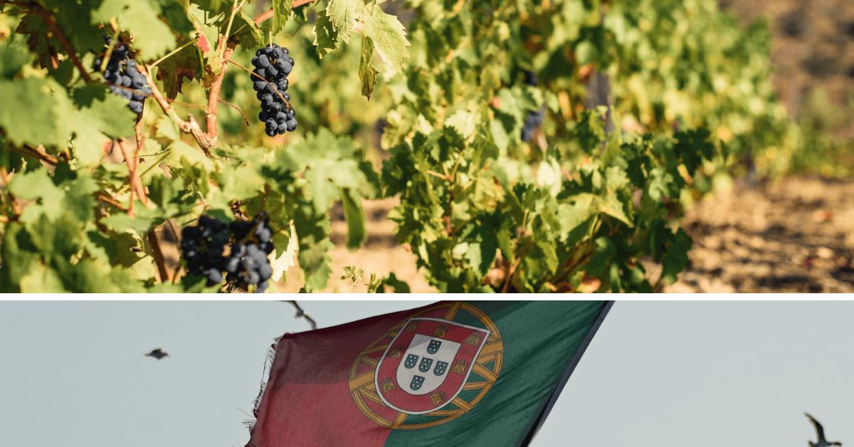 Portugalia – wino z doliny wilków
