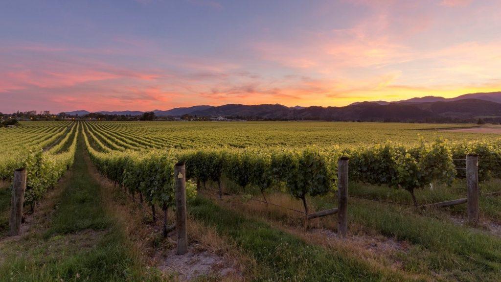 Region winiarski - Nelson.