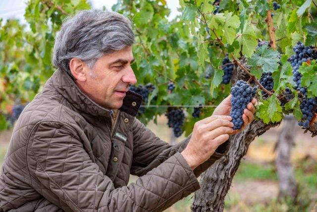 Twórca wina Don Melchior.