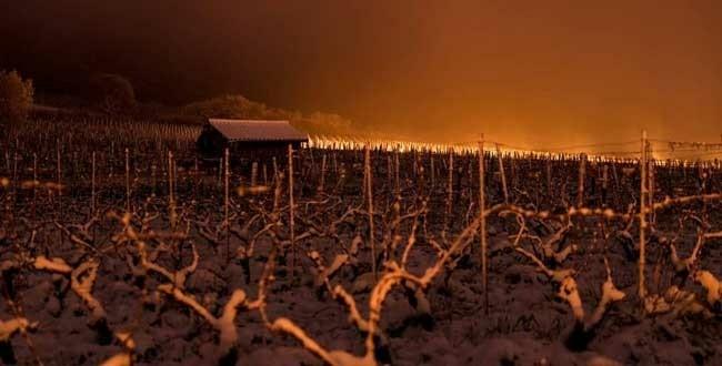 Przymrozki zagrażają winnicom - na północy Francji nie ma dramatu.
