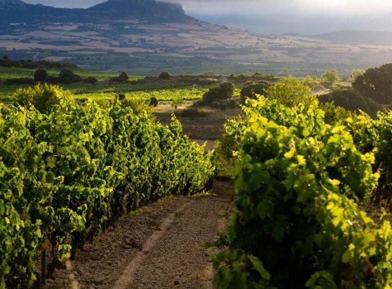 Wino Clarete tutaj powstaje.